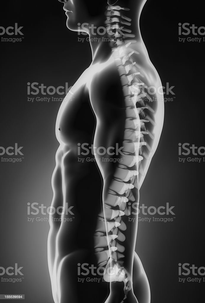 Human spine left lateral view royalty-free stock photo