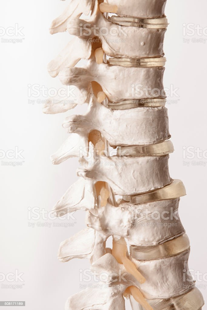 Human Spine Made of Plastic stock photo