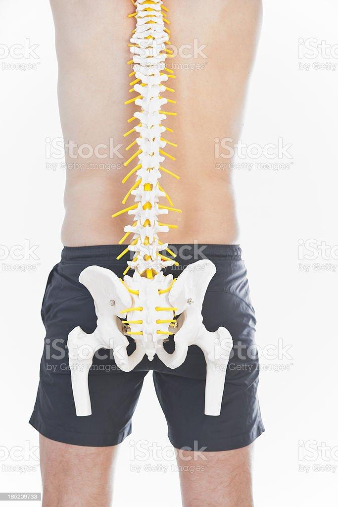 Human spine stock photo