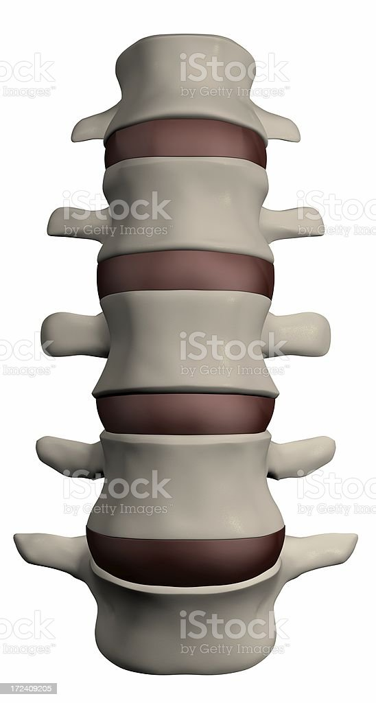 Human spine section royalty-free stock photo