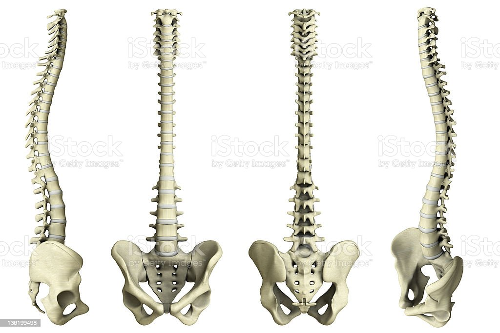 Human spine-4 views stock photo