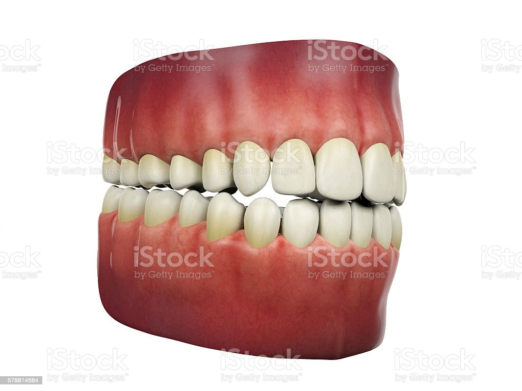 Human teeth isolated on white background, 3D rendering stock photo