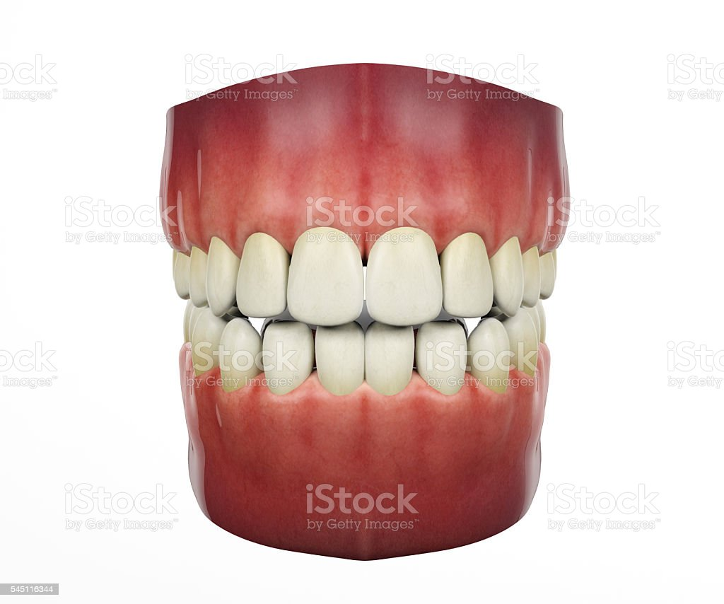Human teeth isolated on white background stock photo