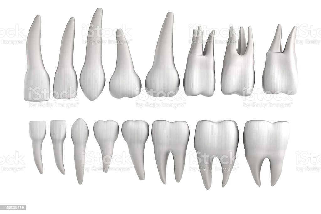 human teeth stock photo