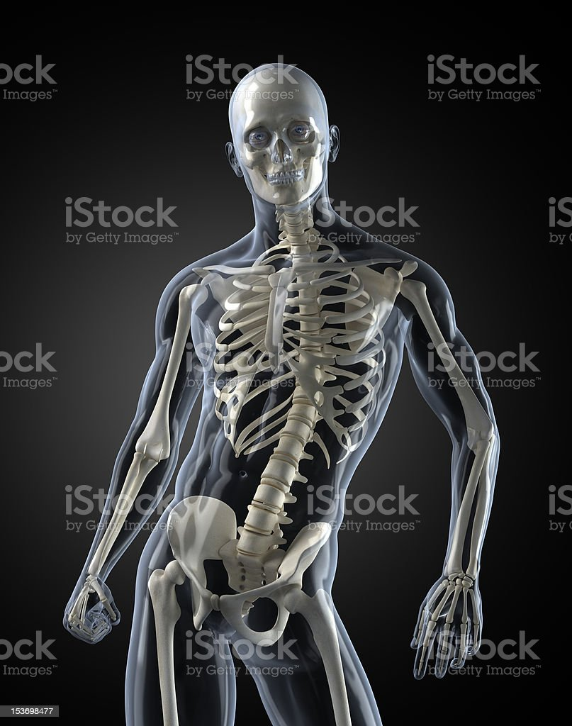 Human transparent body with visible bones stock photo