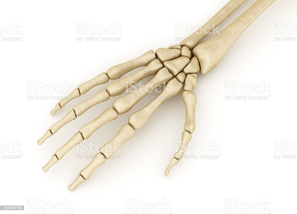 Human wrist skeletal anatomy. Medically accurate 3D illustration stock photo