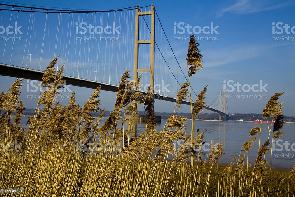 Humber Suspension Bridge and Grass royalty-free stock photo