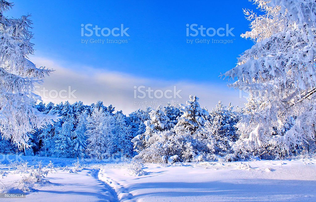 Humble Winter stock photo