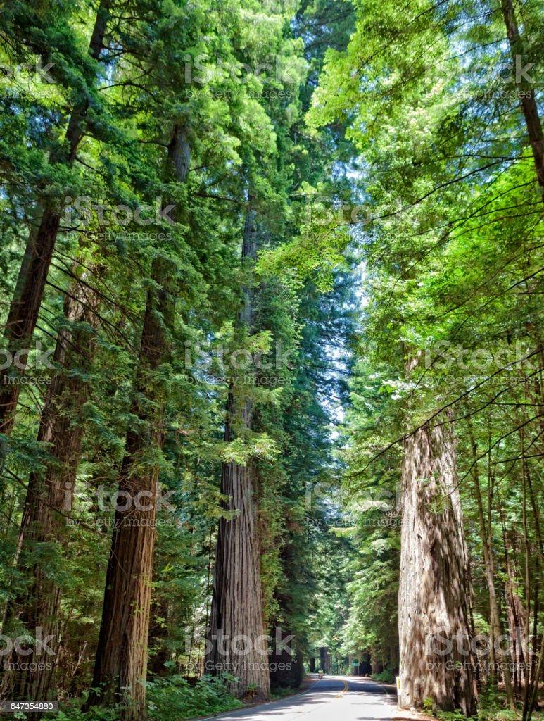Humboldt Redwoods Park stock photo