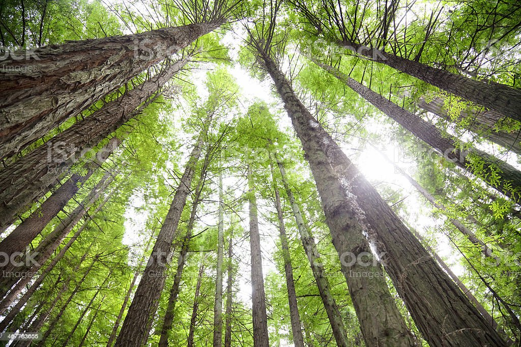 Humboldt Redwoods State Park stock photo