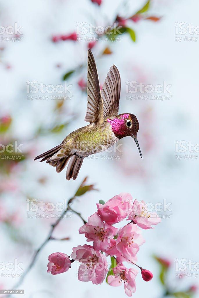 Hummingbird in the garden vertical image spring concept stock photo