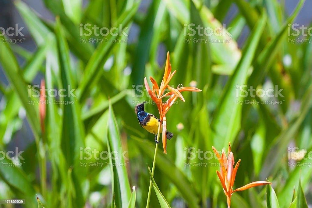 Hummingbird on a flower stock photo