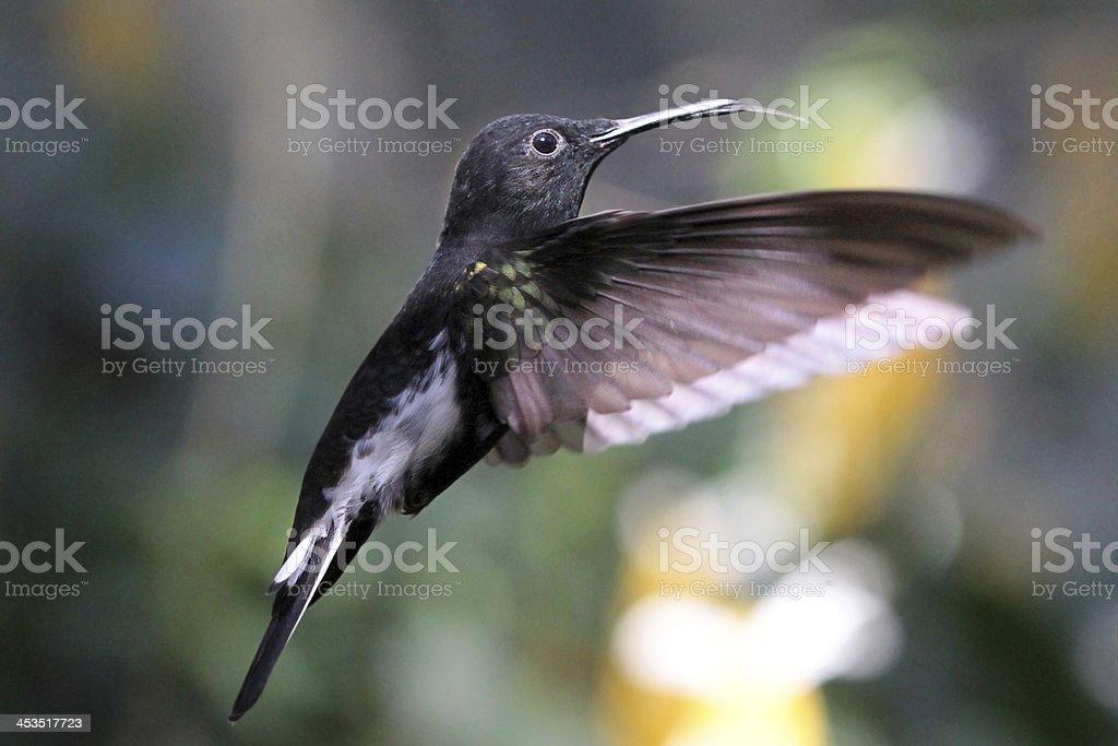 Humminggird stock photo