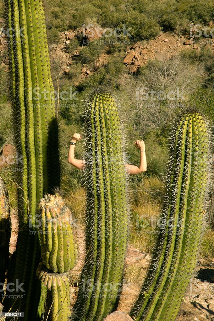 Humorous - Cacti with muscles royalty-free stock photo