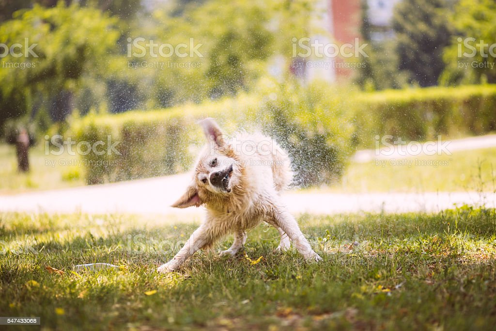 Humorous wet dog on sunny meadow stock photo