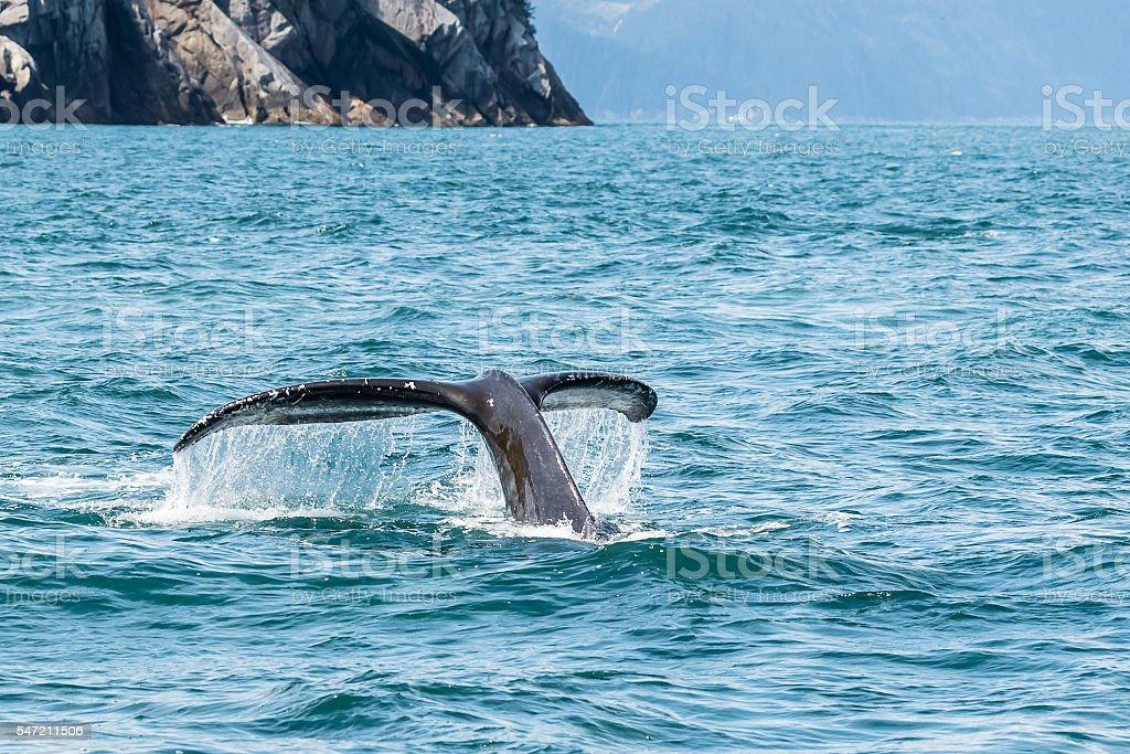 Humpback Tail stock photo