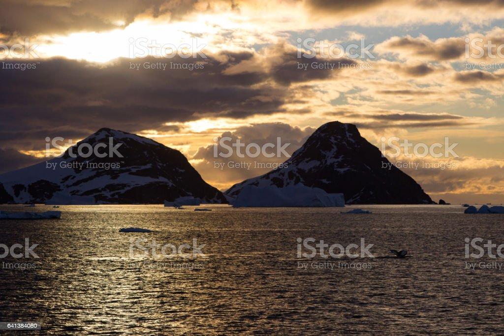 Humpback whale, Antarctic peninsula stock photo