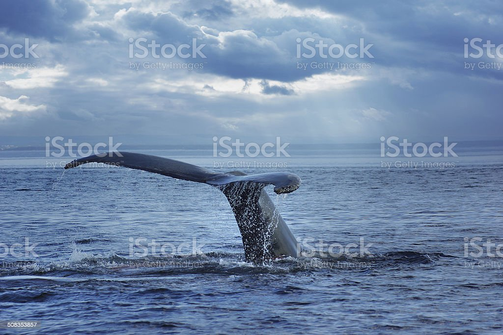Humpback Whale, cloudscape background, Quebec, Canada stock photo