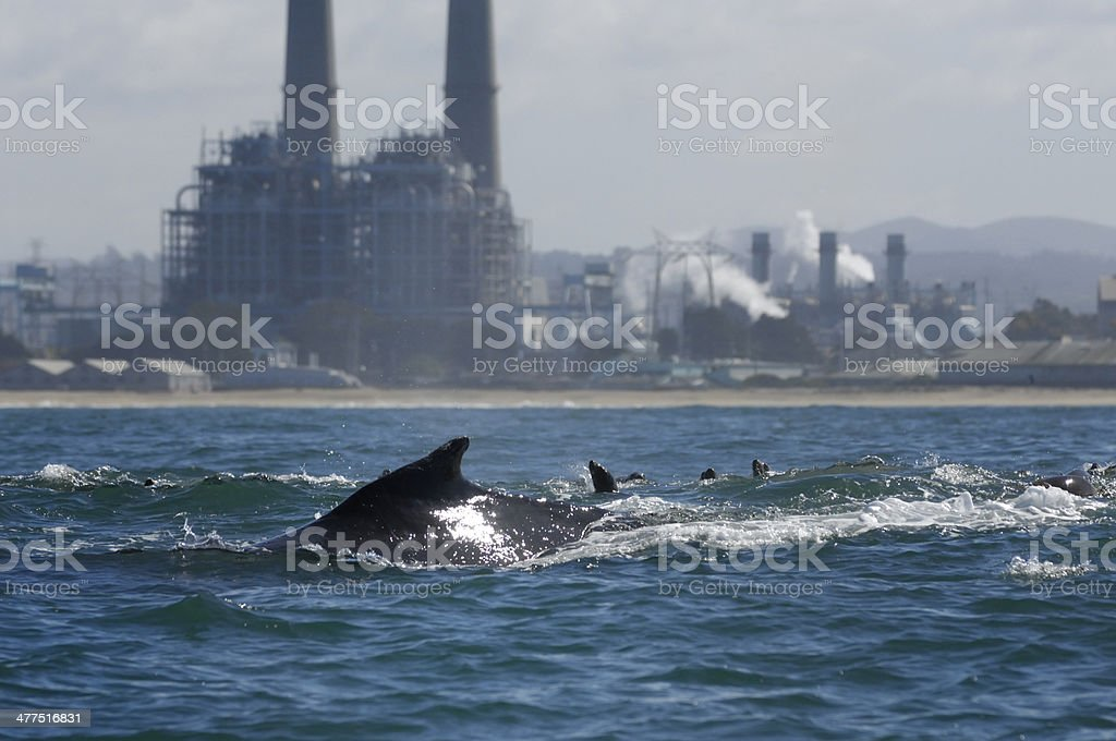 Humpback Whale with Power Plant in Background royalty-free stock photo