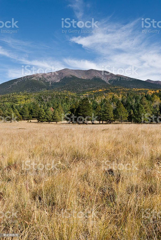 Humphreys Peak from Hart Prairie stock photo