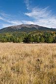 Humphreys Peak from Hart Prairie