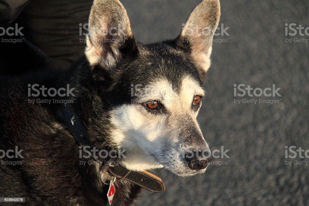 Hund im Sonnenschein stock photo