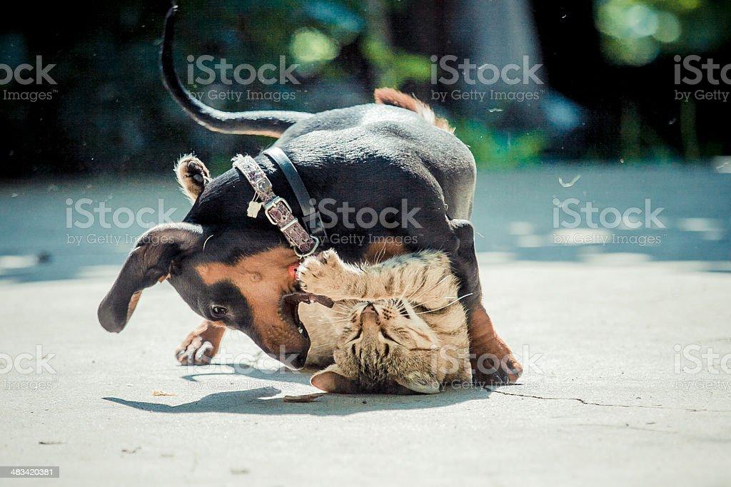 Hund Katze Spiel stock photo