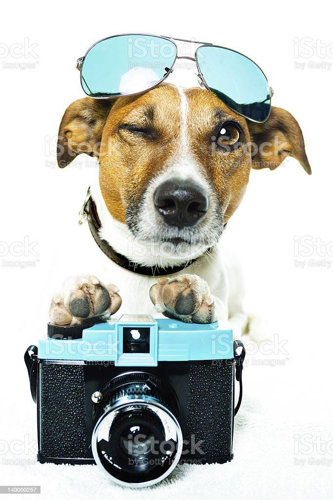 Hund mit photokamera stock photo