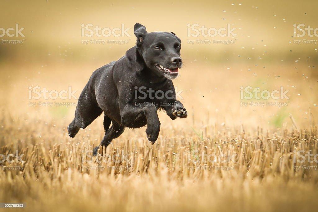 Hund stock photo