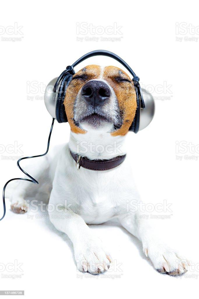 Hund  trägt brille stock photo