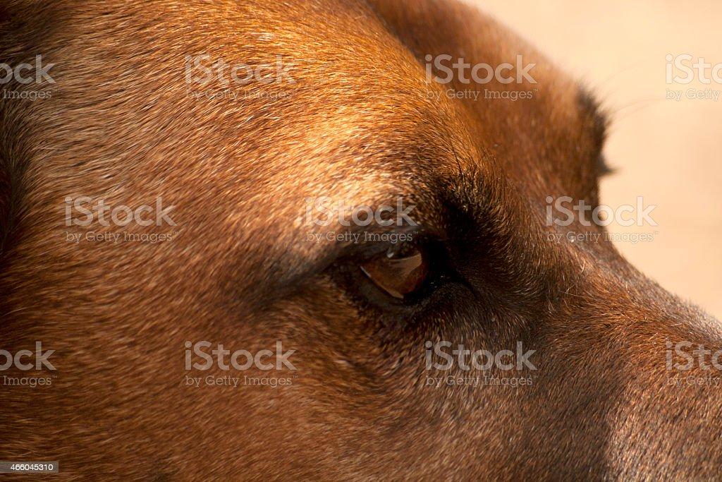 Hunde Auge Close up stock photo