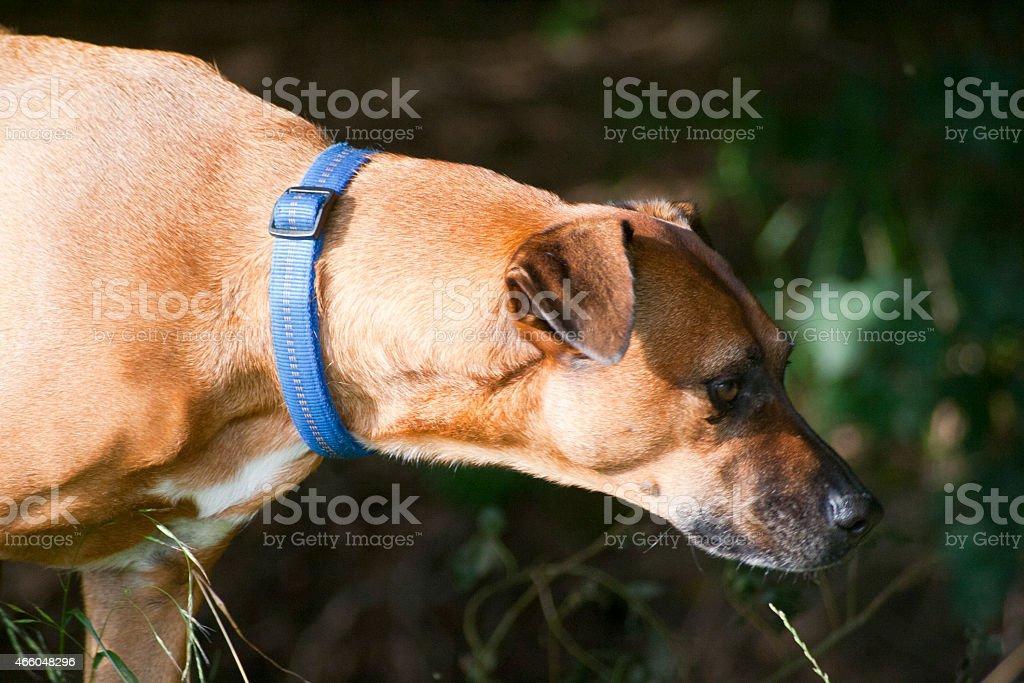 Hunde Portrait stock photo