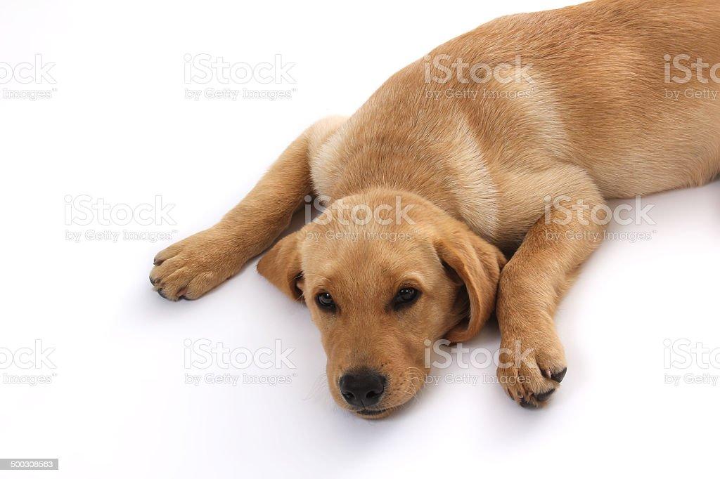 Hunde-58 stock photo