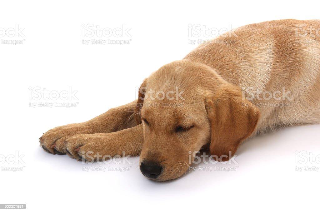 Hunde-61 stock photo
