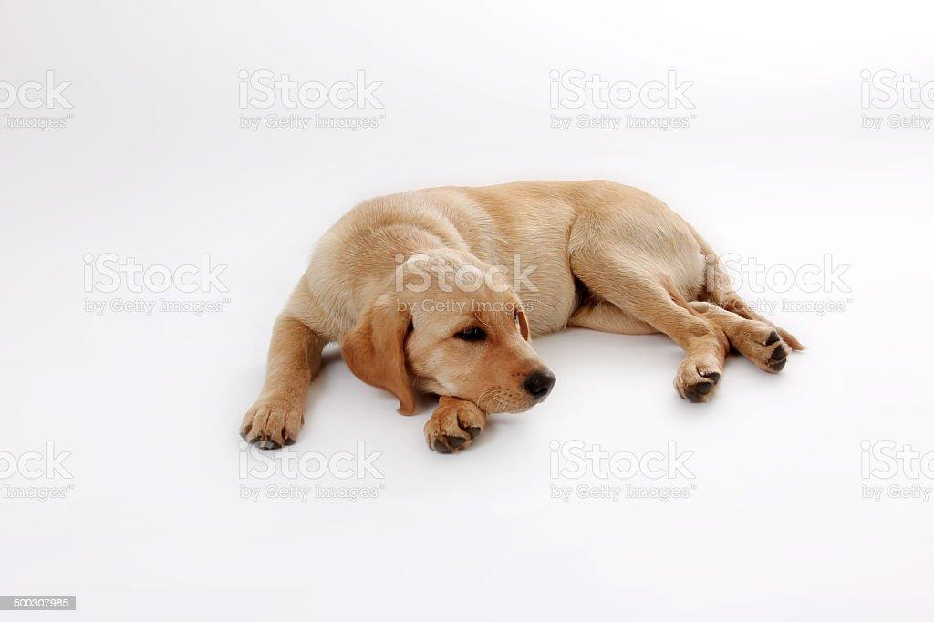 Hunde-63 stock photo