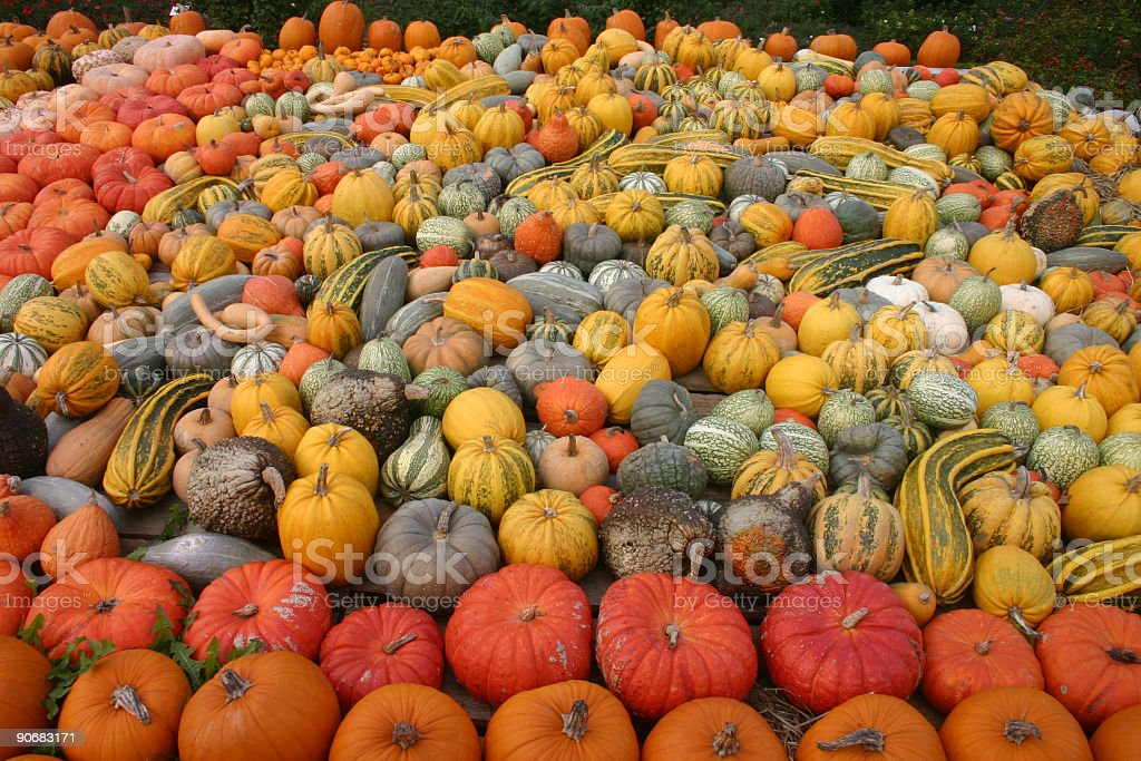 Hundreds of different pumkins royalty-free stock photo