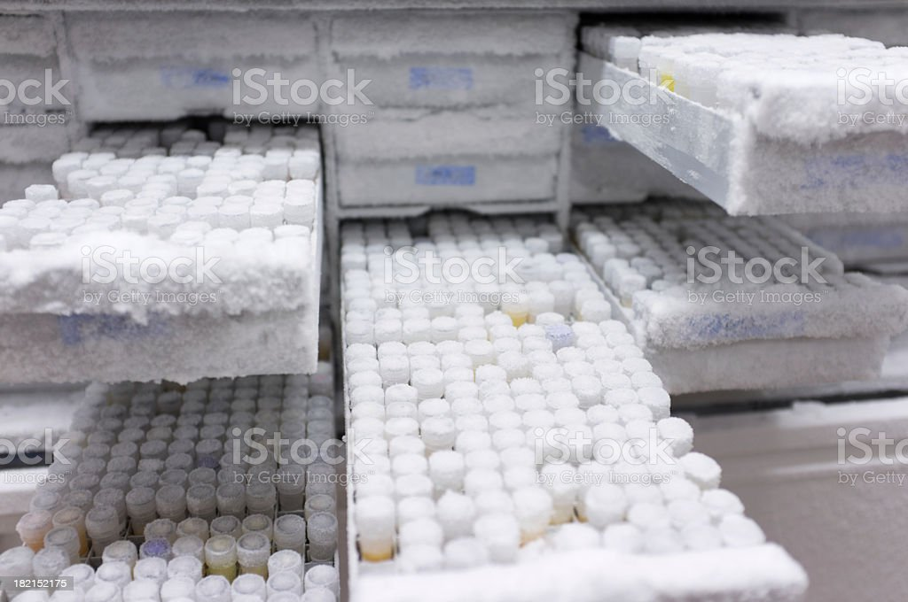 Hundreds of medical samples being placed in a deep freezer royalty-free stock photo