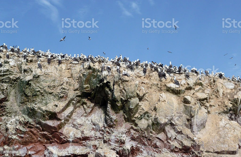 Hundreds of seabirds in the Peruvian Ballestas Islands stock photo