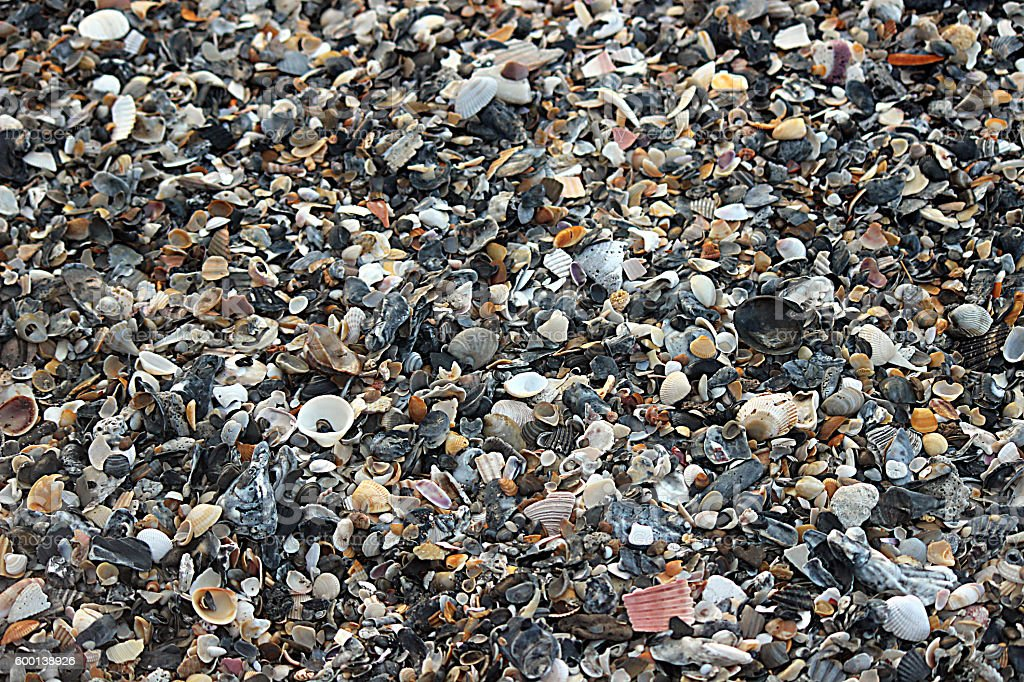 Hundreds of Seashells as a Background stock photo