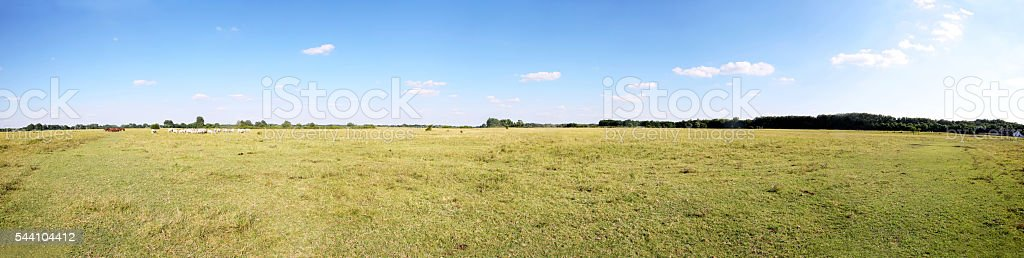 Hungarian puszta with herd of horses and grey cattle cows stock photo