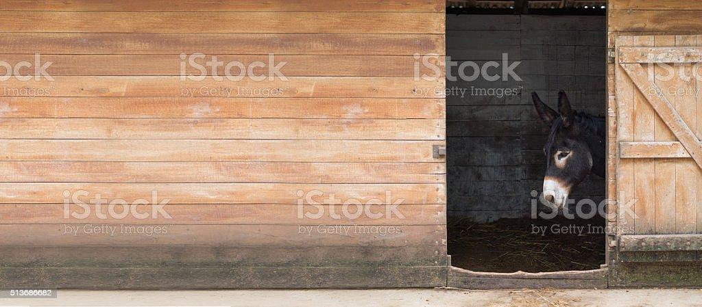 hungarian sad black donkey stock photo