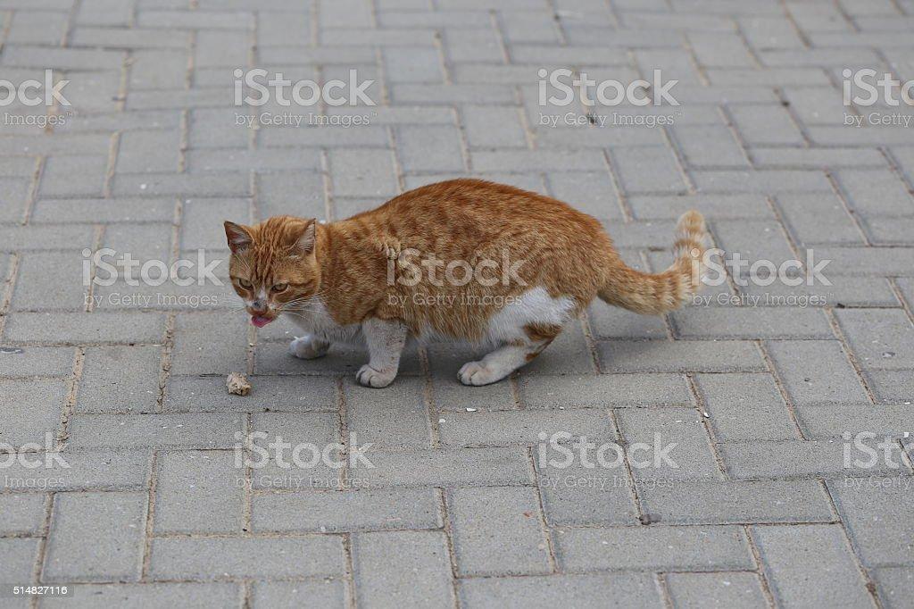 Hungry Cat Eats Bread stock photo