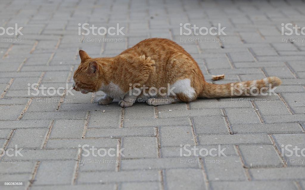 Hungry Cat Eats Bread. stock photo