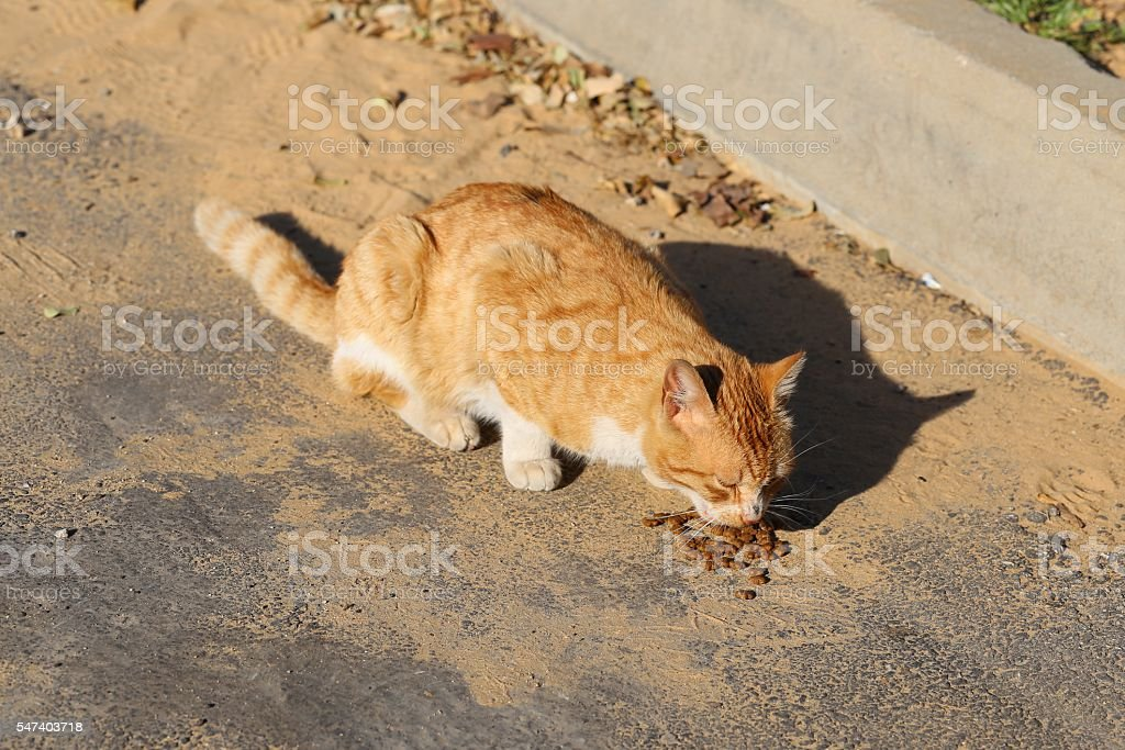 Hungry Cat Eats Cat Food In The Street stock photo