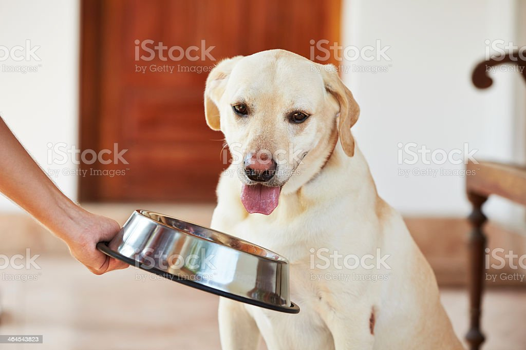 Hungry dog looking at empty bowl stock photo