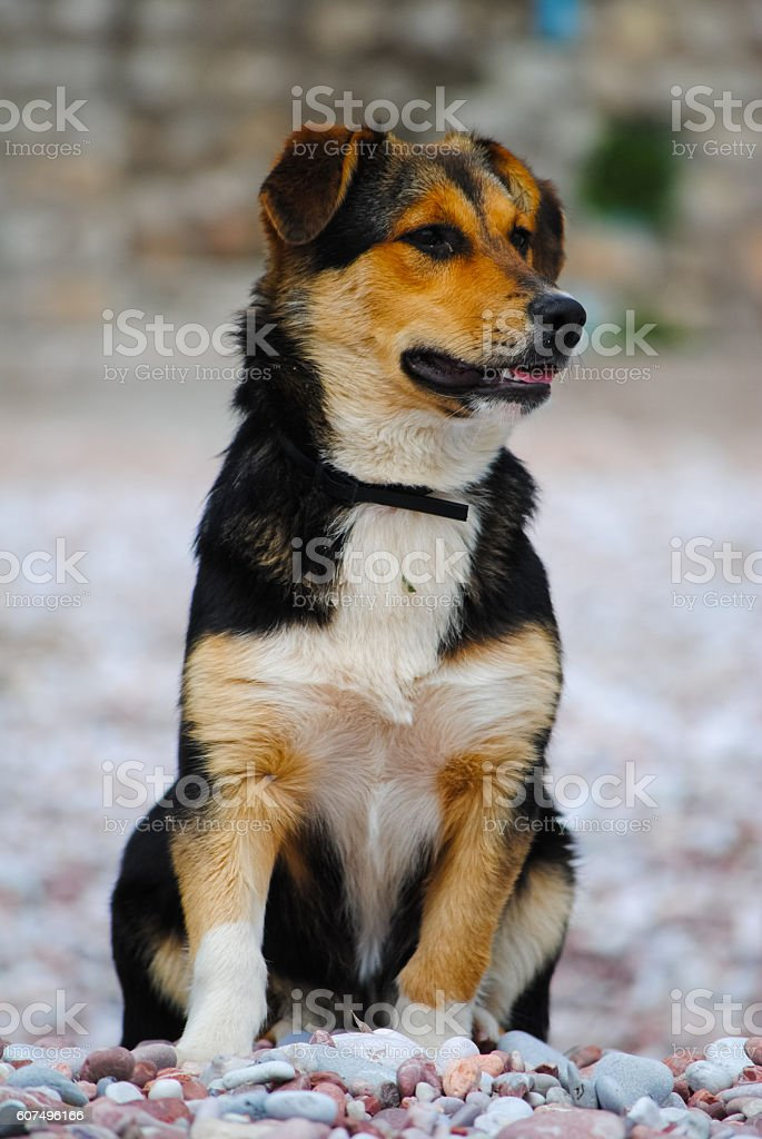 Hungry dog looking into the distance. stock photo