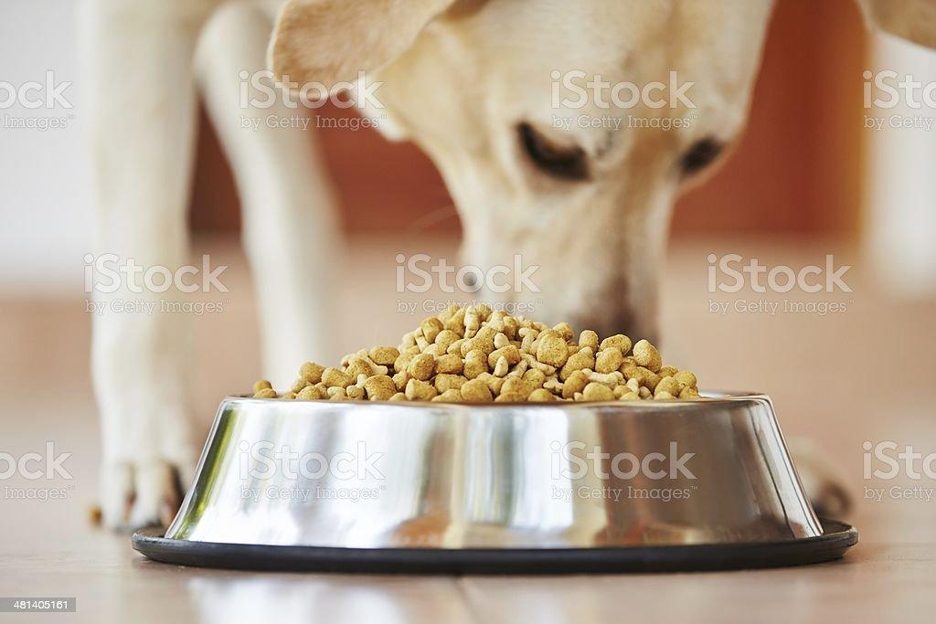 Hungry dog royalty-free stock photo