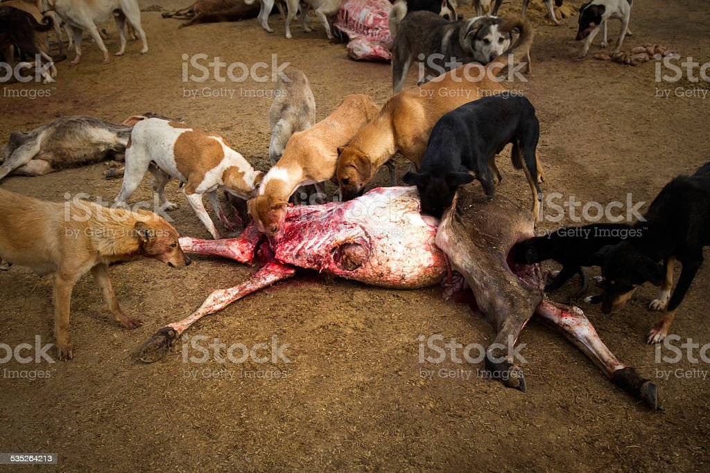 Hungry Dogs stock photo