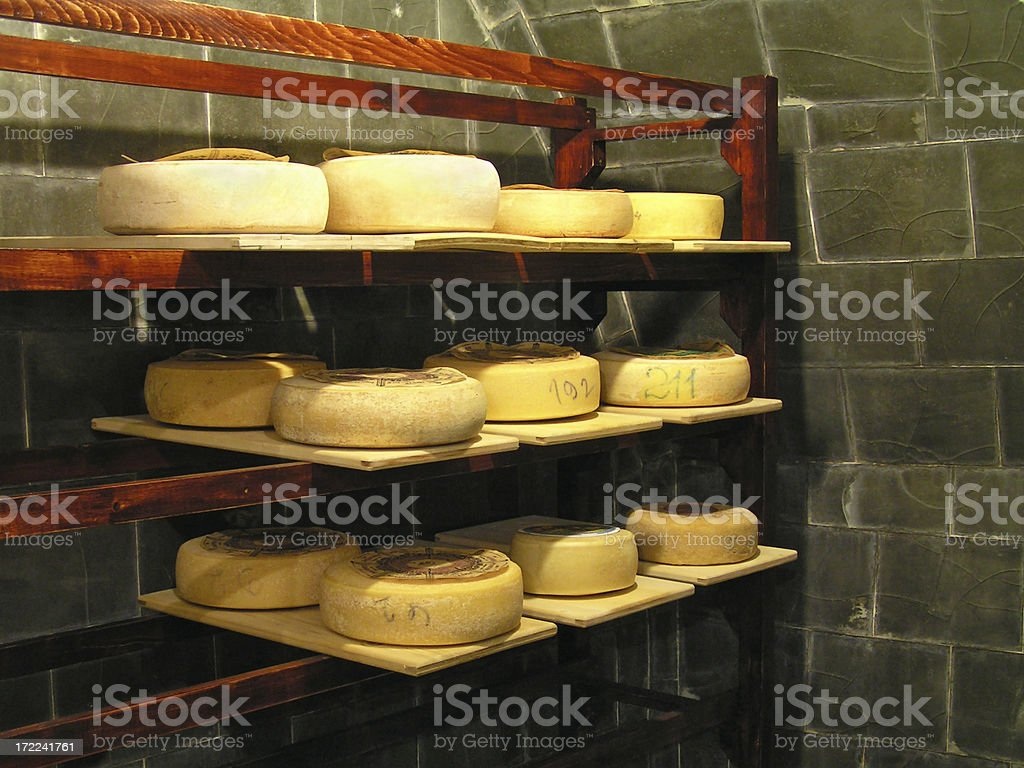 hungry for cheese royalty-free stock photo