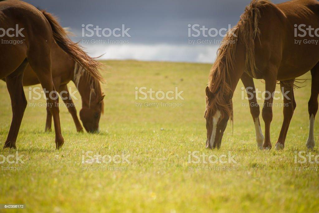 Hungry Horses stock photo